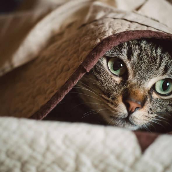 gatto-si-nasconde[1]